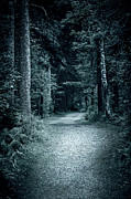 Gloomy Trees Posters - Path in night forest Poster by Elena Elisseeva