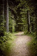 Gloomy Photo Prints - Path in old forest Print by Elena Elisseeva