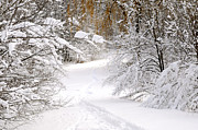 Winter Trees Metal Prints - Path in winter forest Metal Print by Elena Elisseeva
