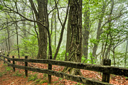 Fences Prints - Path into the Forest Print by Debra and Dave Vanderlaan