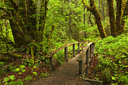 Peaceful Scenery Posters - Path into the Woods Poster by Andrew Soundarajan