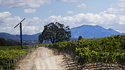 Sonoma County Vineyards. Framed Prints - Path of Grape Framed Print by Stan Angel