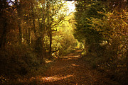 Cornwall Prints - Path of Leaves Print by Brian Roscorla