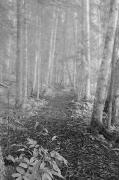 Haze Photo Posters - Path Through A Mixed Woods Forest In Poster by Roberta Murray