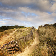 Sand Dunes Posters - Path Through Dunes Poster by Colin and Linda McKie