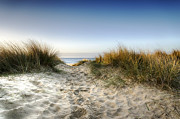 Sand Dunes Art - Path through the Dunes by Helen Hotson