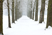 Rime Photo Framed Prints - Path Through The Trees In A Mild Snow Shower Framed Print by Fizzy Image