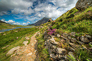 Plants Digital Art Prints - Path to Lake Idwal Print by Adrian Evans