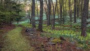 Litchfield Hills Prints - Path to the Daffodils Print by Bill  Wakeley