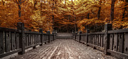 Wooden Metal Prints - Path to the Wild Wood Metal Print by Scott Norris