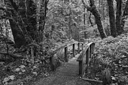 Woods Photo Metal Prints - Path to the Woods Metal Print by Andrew Soundarajan
