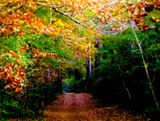 Colors Of Autumn Prints - Paths We Choose Print by Karen Wiles