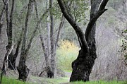 Sycamore Grove Park Prints - Pathway into the Wild Print by Jean Marshall