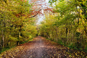 Autumn Photos Digital Art Prints - Pathway through Sunlit Autumn Woodland Trees Print by Natalie Kinnear