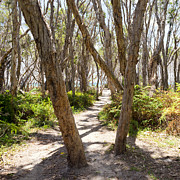 Tim Hester - Pathway Through Trees