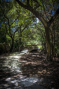 Oak Photos - Pathway to the Bridge by Marvin Spates