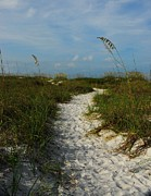 Sea Oats Metal Prints - Pathway To The Sea Metal Print by Mel Steinhauer