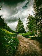 Silvia Ganora - Pathway with pines