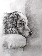 Pooch Drawings Posters - Patience Poster by Ann Pease