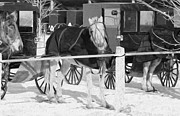 Horse And Buggy Posters - Patiently waiting  Poster by Tracy Winter