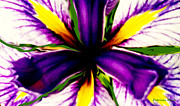 Patricia Bunk's Iris  Print by Patricia Bunk