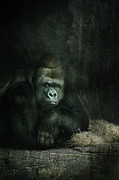 Sue Fulton - Patrick the Gorilla