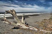 Drift Wood Framed Prints - Patricks Drift Log Framed Print by Adam Jewell