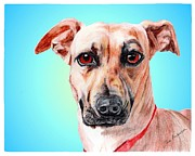 Pit Bull Mixed Media Metal Prints - Patron a former shelter sweetie Metal Print by Dave Anderson