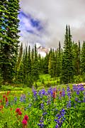 Randall Branham - Patrotic Mt Rainier