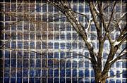 Patterns Of Winter Print by Joanna Madloch