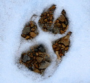 Dog Paw Print Prints - Paw Print Print by Lori Reeths
