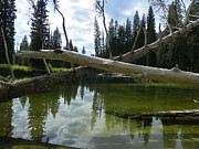Idaho Scenery Prints - Payette River - Payette National Forest Print by Photography Moments - Sandi