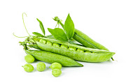 Seeds Posters - Pea pods and green peas Poster by Elena Elisseeva