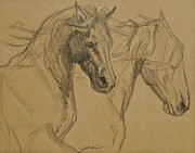 Textured Horse Art Drawings - Peace And Justice Sketch by Jani Freimann