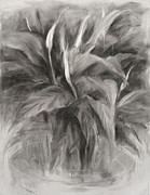 Potted Drawings Metal Prints - Peace Lily Metal Print by Steve Dininno