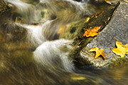 Fall Leaves Prints - Peaceful Creek Print by Christina Rollo
