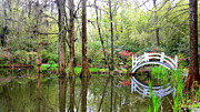 Garden Bridge Posters - Peaceful Cypress Pond Poster by Carol Groenen