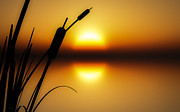 Fall Grass Metal Prints - Peaceful Dawn Metal Print by Bob Orsillo