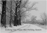 Snowy Road Metal Prints - Peaceful Holiday Card Metal Print by Carol Groenen