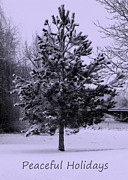 Winter Trees Metal Prints - Peaceful Holidays Metal Print by Carol Groenen