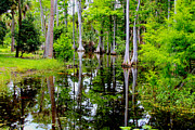 Alligator Bayou Photos - Peaceful lake by Carey Chen