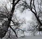 Gail Matthews - Peaceful Lake Scene in Winter