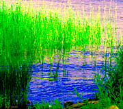 Summer Along The Canal Paintings - Peaceful Stream  Quebec Landscape Art Tall Grasses At The Lakeshore Waterscene Carole Spandau by Carole Spandau