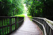 Stephanie Grooms - Peaceful Walkway