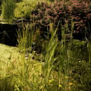 Bonnie Bruno - Peaceful Water Garden