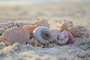 Seashell Framed Prints - Peaceful Whispers Framed Print by Melanie Moraga