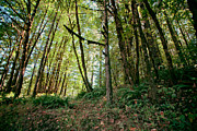 Bonnie Bruno - Peaceful Woods