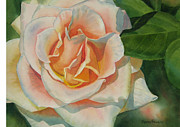 Close Up Floral Painting Prints - Peach and Gold Colored Rose Print by Sharon Freeman