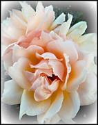 Leslie Hunziker - Peach Beauty