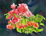 Colored Flowers Painting Posters - Peach Colored Bougainvillea with Dark Background Poster by Sharon Freeman